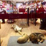 Якщо вам заважають тварини, не заходьте в наш магазин!