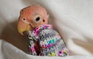Светрик для папужки