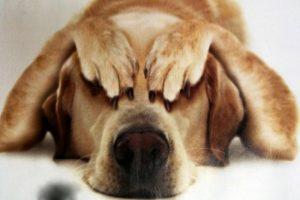 Наскільки добре собаки розуміють нашу мову