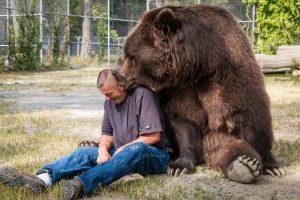 Як розрадити сумного ведмедя?